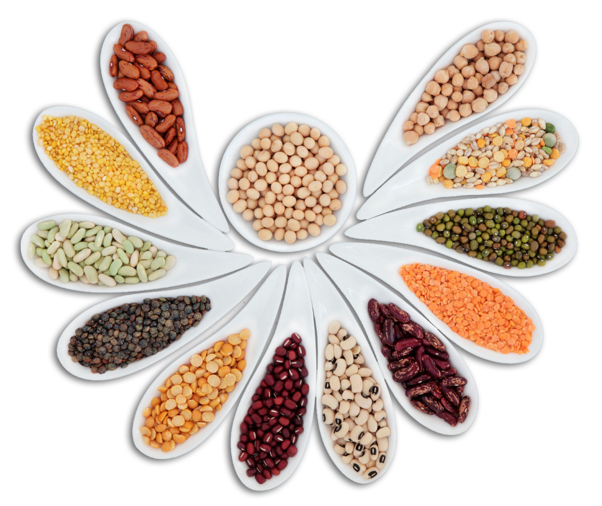 banner-pulses